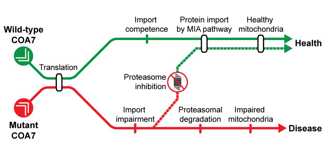 zdjęcie schematu