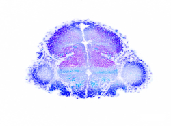 subpage logo